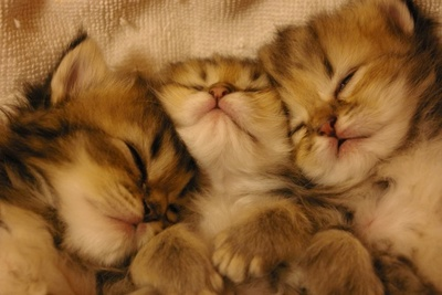 cat221.jpg